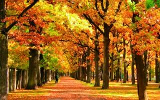 Sügisene park (Toomas Olev) _ Autumn park